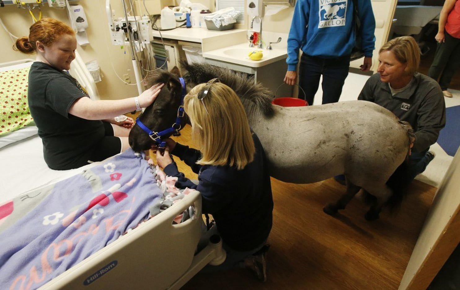 Miniature horses are welcome as service animals, but monkeys are a maybe, US airline regulators say - Washington Post